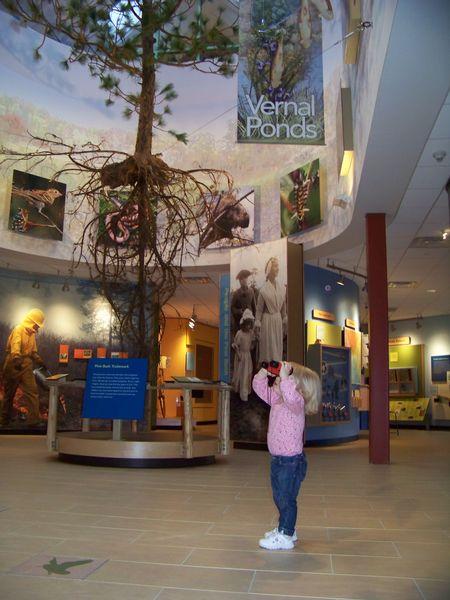 Albany Pine Bush | Environmental Educational Center ...