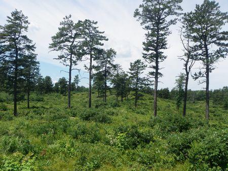 Albany Pine Bush   Environmental Educational Center ...